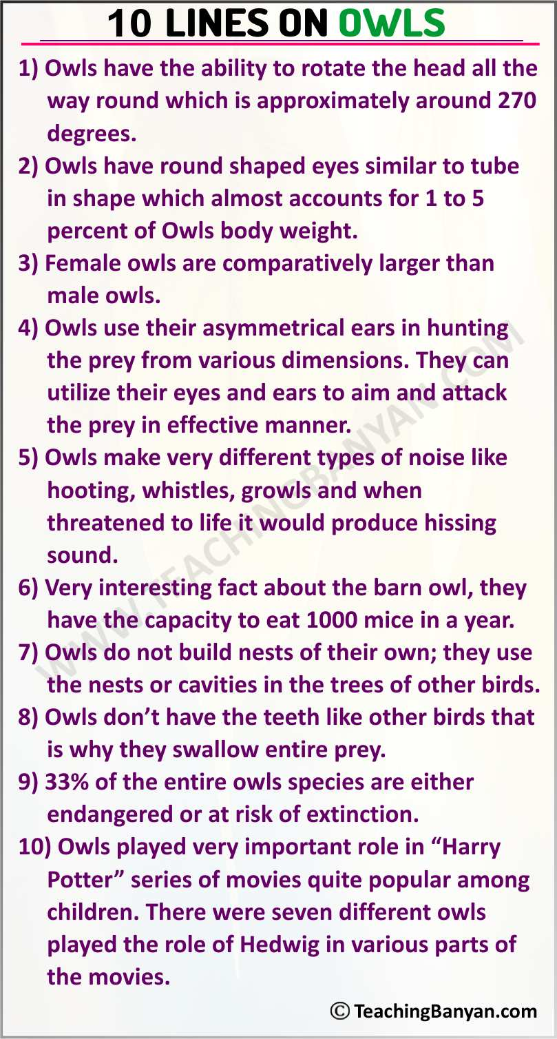 10 Lines on Owls