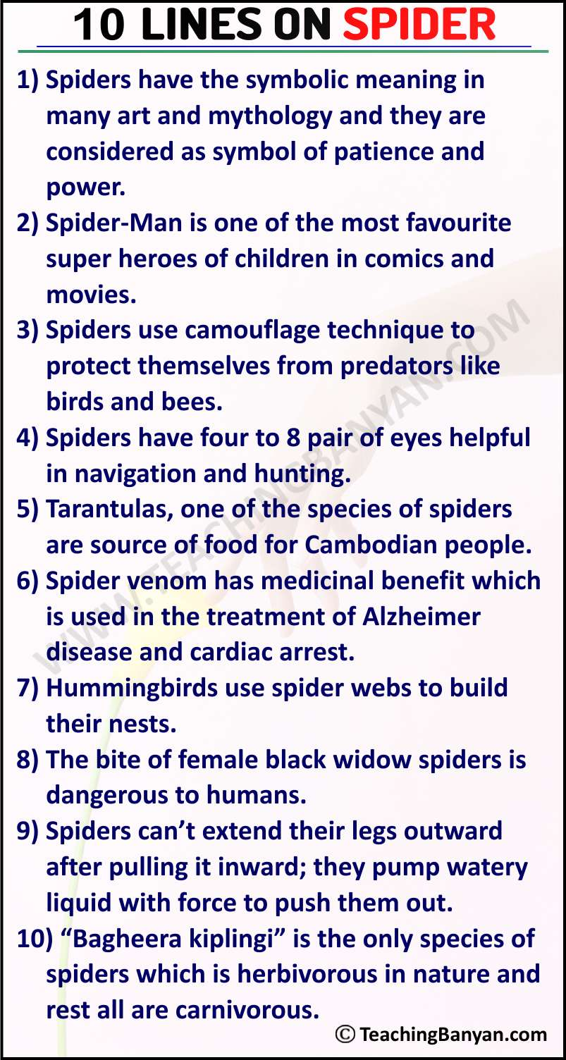 10 Lines on Spider